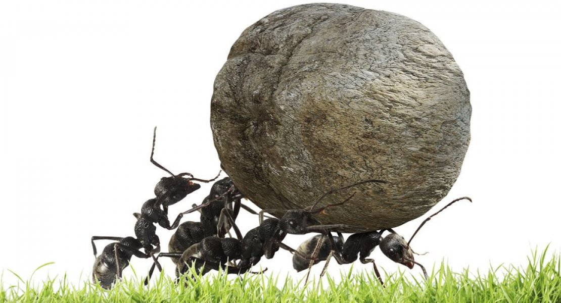 Ants lifting large rock. Atlas shrugged parody